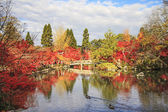Autumn Japanese garden — 图库照片
