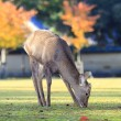Deer with nice background — Stock Photo