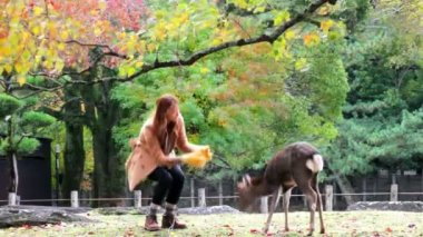 Nara is a major tourism destination — Stock Video