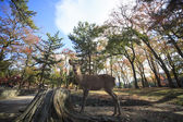 Jeleń z ładne tło — Zdjęcie stockowe