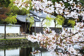 Nice sakura place — Stock Photo