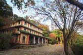 Beautiful maple place — Stock Photo