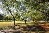 フィールド上の緑の芝生 — ストック写真