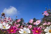 Field of daisy flowers — Foto de Stock