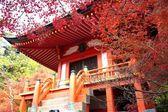 The fall season of Japan — Foto Stock