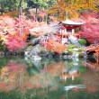 Fall season of Japan — Stockfoto #37471445