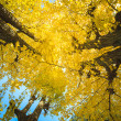Golden leaves at autumn — Stockfoto #37471461