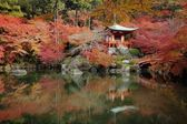 The fall season of Japan — Stock fotografie