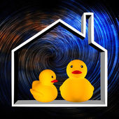 Duck in the house — Stock Photo