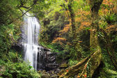 Waterfall with nice maple tree — Stock Photo