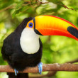 Stock Photo: Colorful tucin aviary