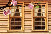 Beautiful flowering Japanese cherry — Stock Photo