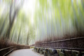 Bamboo forest with a road — Stock Photo