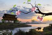 Beautiful flowering Japanese cherry — Stockfoto