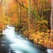 Autumn Colors of Oirase Rive — Stock Photo