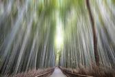 Green bamboo fence background — Stockfoto
