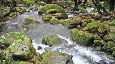Córrego fluindo da montanha — Vídeo Stock