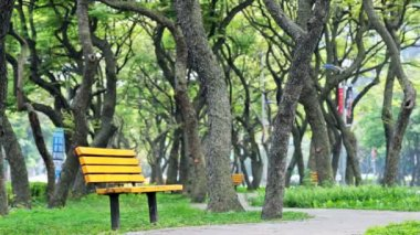 Green tree with chair  followe road — Stock Video