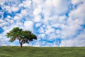 Background image of lush grass field — Stock Photo