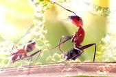 Ant для adv или другие цели использования — Стоковое фото