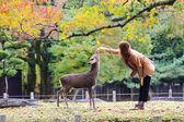 奈良,日本,在秋季的鹿 — 图库照片