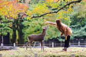 Deer in Nara, Japan, at fall — Stock Photo