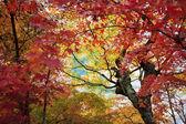 Jelenie w nara, Japonia, na jesieni — Zdjęcie stockowe