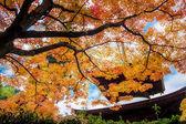 秋は、日本、奈良の鹿 — ストック写真