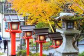 Maple season at fall — Stock Photo