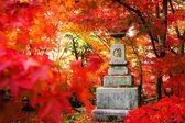 Visão noturna da época de maple no outono, japão — Fotografia Stock