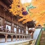 ������, ������: Night view of maple season at fall japan