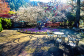 Beautiful Sakura Garden in Wuling F — Стоковое фото