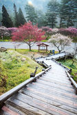 Beautiful Sakura Garden in Wuling F — Foto Stock