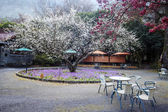 Beautiful Sakura Garden in Wuling F — Stockfoto