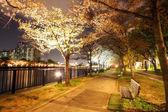 Sonbahar sezonu kyoto, Japonya — Stok fotoğraf