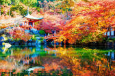 Autumn Japanese garden with maple in Kyoto,Japan — Stock Photo