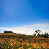 Daylily flower at sixty stone mountain — Stock Photo