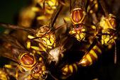 Wesp nest — Stockfoto
