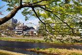 Sakura seaskon in Japan — Stock Photo