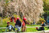 Sakura season in Kyoto, Japan — Stockfoto