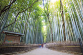 The bamboo forest of Kyoto, Japan — Stock Photo