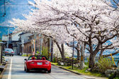 Sakura season in Japan — Stockfoto