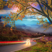 Beautiful maple with nice background — Stock Photo