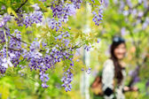 Wisteria trellis. great views of Taiwan — Stock Photo