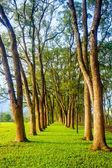 Beautiful park tree — Stock Photo