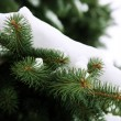 Winter tree — Stock Photo #15808677