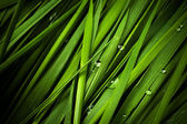 Grass with droplets — Stock Photo