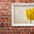 Yellow tulip - Foto de Stock