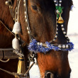 Festive horse - Stock Photo