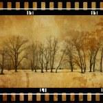 grunge bäume — Stockfoto
